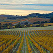 Fall In Wine Country Poster