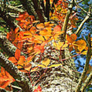 Fall Ivy On Pine Tree Poster