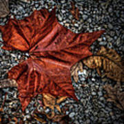Fall Leaf Poster