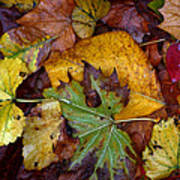 Fall Leaves 1 Poster