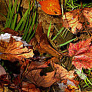 Fall Leaves 5 Poster