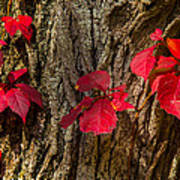 Fall Leaves Against Tree Trunk Poster