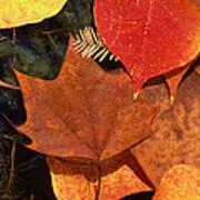 Fall Leaves I I Poster