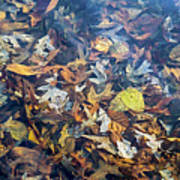 Fall Leaves In A Pond Poster