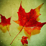 Fall Leaves Poster