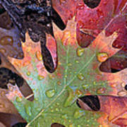 Fall Leaves I V Poster
