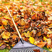 Fall Leaves With Rake Poster