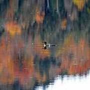 Fall Loon Poster