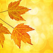 Fall Maple Leaves Trio With Bokeh Background Poster