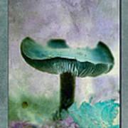 Fall Mushroom 18 Poster