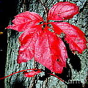 Fall Red Leaf Poster