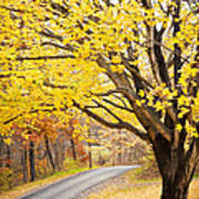 Fall Road Poster