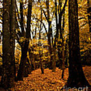 Fall Scene In Bidwell Park Poster