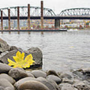 Fall Season Along Portland Willamette River By Marina Poster