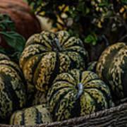 Fall Squash Harvest Poster