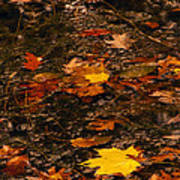 Fall Stream Bed Poster