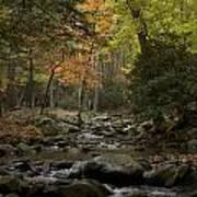 Fall Stream Cades Cove Gsmnp Poster