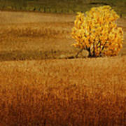 Fall Tree And Field #1 Poster