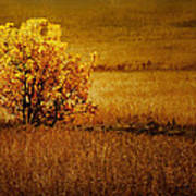 Fall Tree And Field #2 Poster