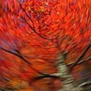 Fall Tree Carousel Poster