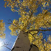 Fall Tree Poster by David Yack