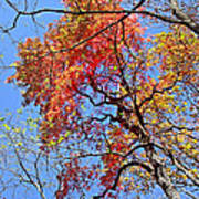 Fall Trees 2 Of Wnc Poster