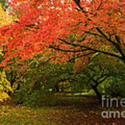 Fall Trees Poster