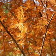 Fall Trees II Poster