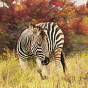 Fall Zebra Poster