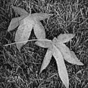 Fallen Autumn Leaves In The Grass During Morning Frost Poster