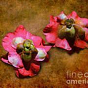 Fallen Blossoms Poster