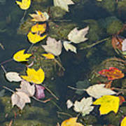Fallen Leaves 2 Poster