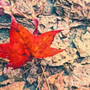 Fallen Red Leaf Poster