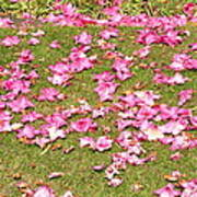 Fallen Rhododendron Poster