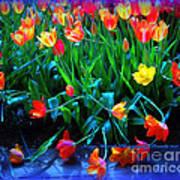Fallen Tulips Poster