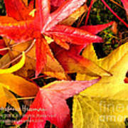 Falling Colors Fall Leaves Poster
