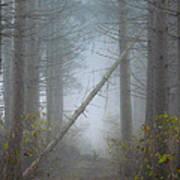 Falling Tree Poster