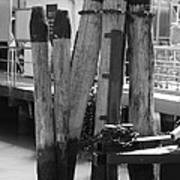 Family Of Pilings Poster