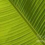 Fan Of Green 2 Poster