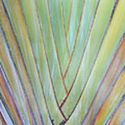 Fan Palm Abstract 2 Poster