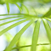Fan Palm Fronds Poster