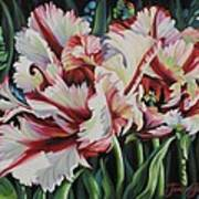 Fancy Parrot Tulips Poster