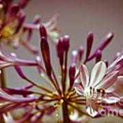 Fantastic Bloom Poster