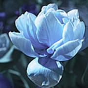 Fantastic Flowers  Poster