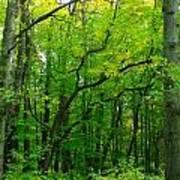 Fantastic Forest Poster