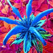 Fantasy Flower 1 Poster