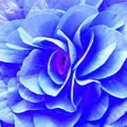 Fantasy Flower 10 Poster