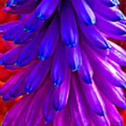 Fantasy Flower 5 Poster