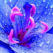 Fantasy Flower 6 Poster