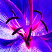 Fantasy Flower 9 Poster